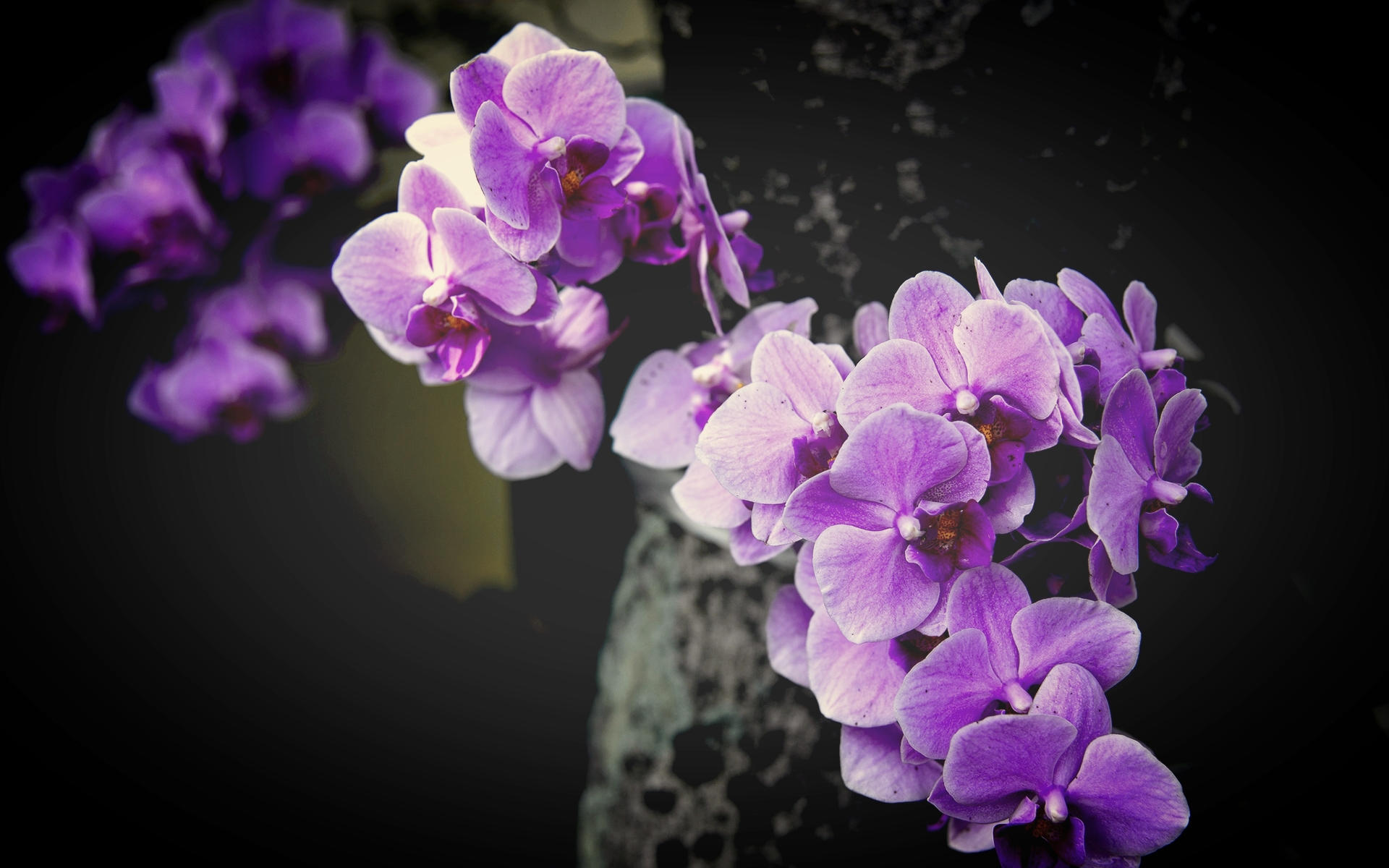 Purple-Orchid-Flower-Pictures.jpg