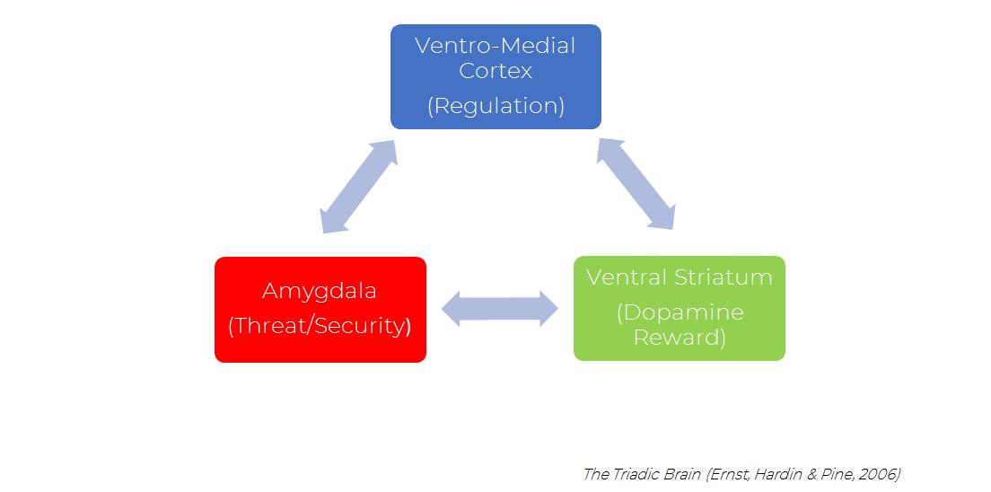 Triadic Brain.png