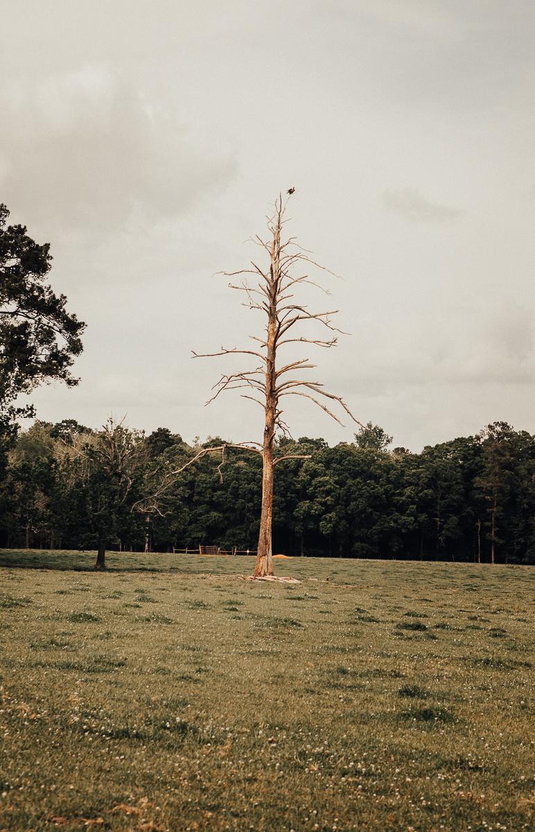white oaks pastures.jpg