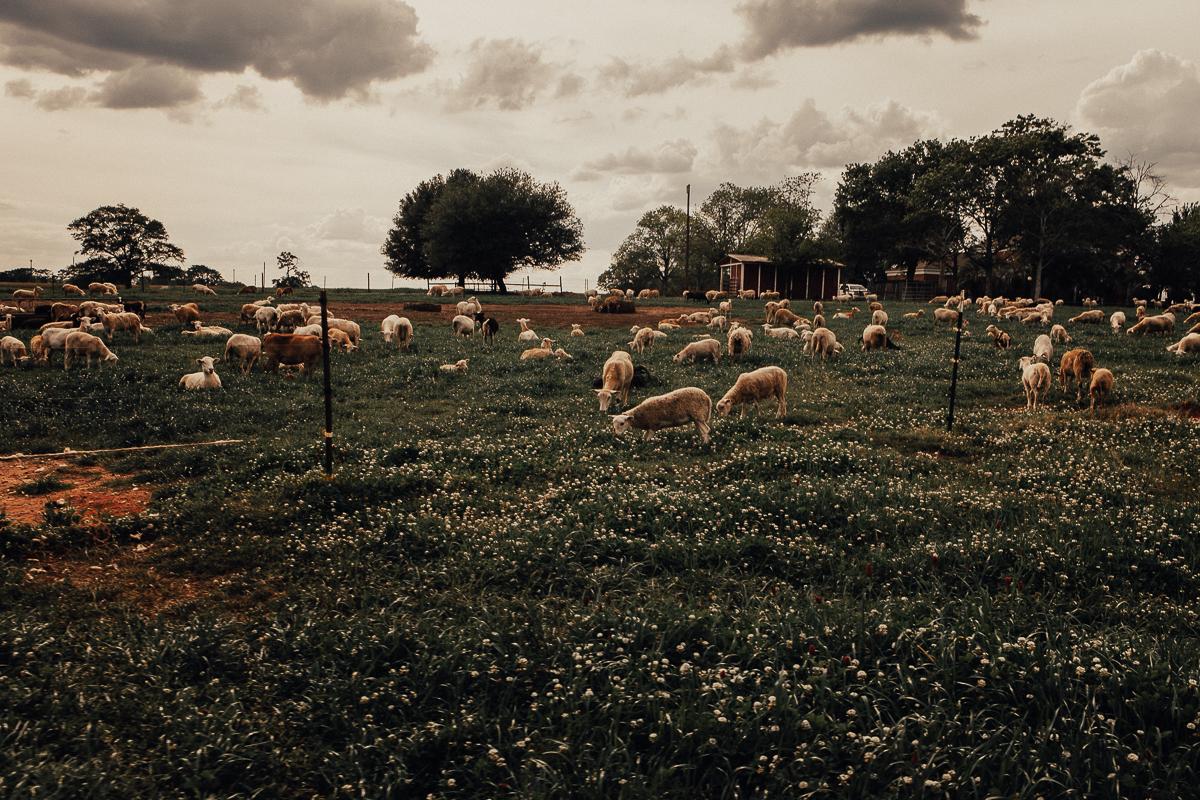 white oaks pastures-10.jpg