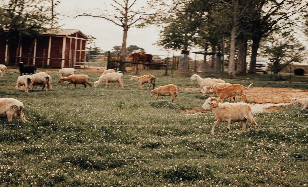 white oaks pastures-12.jpg
