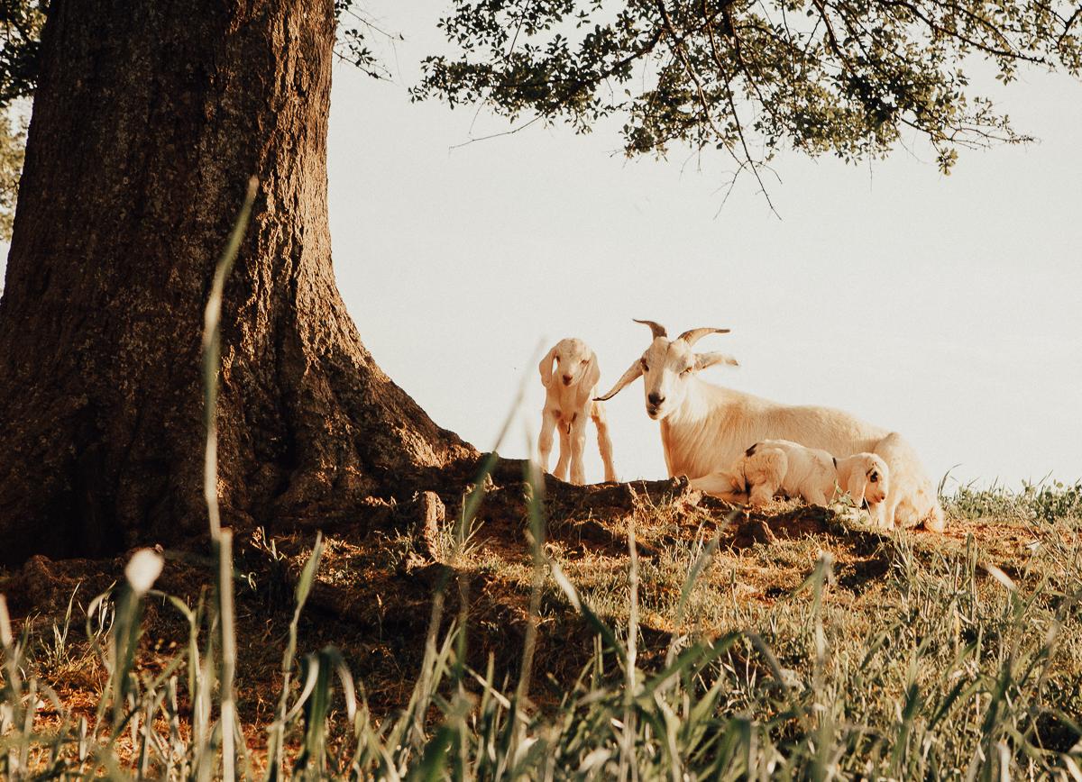 white oaks pastures-22.jpg