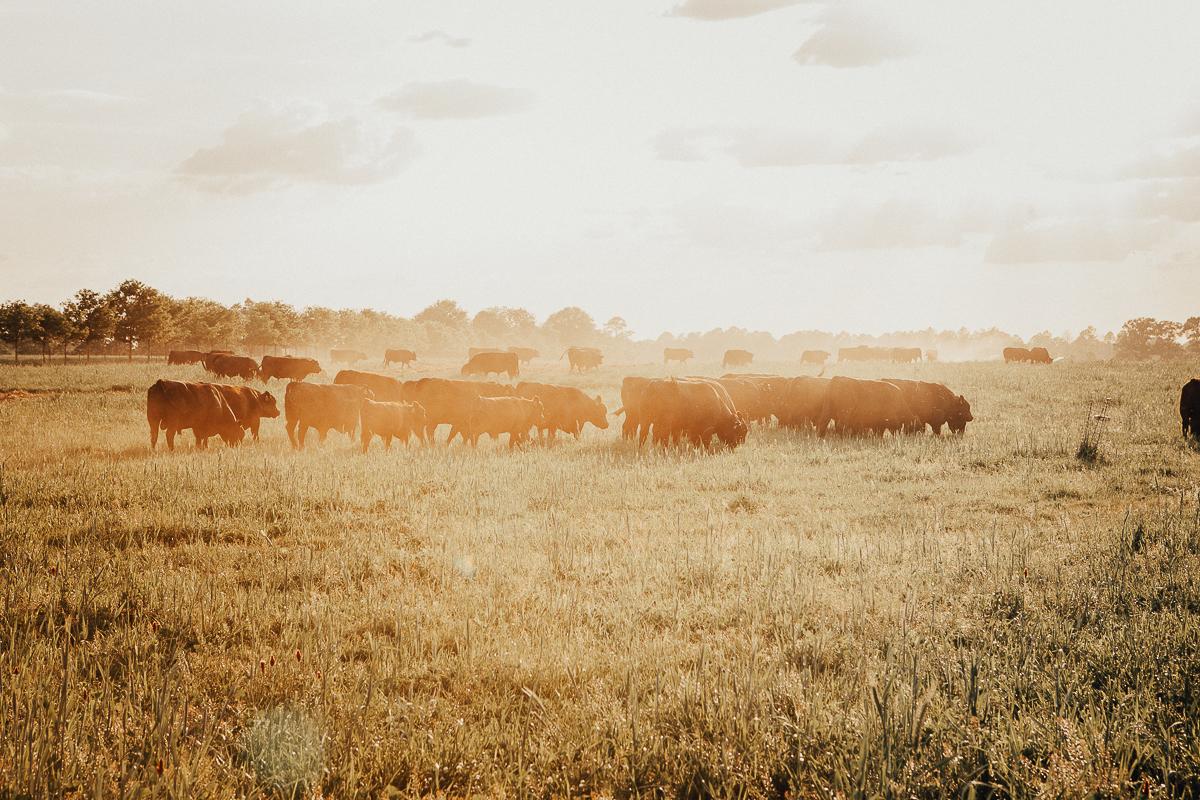 white oaks pastures-31.jpg