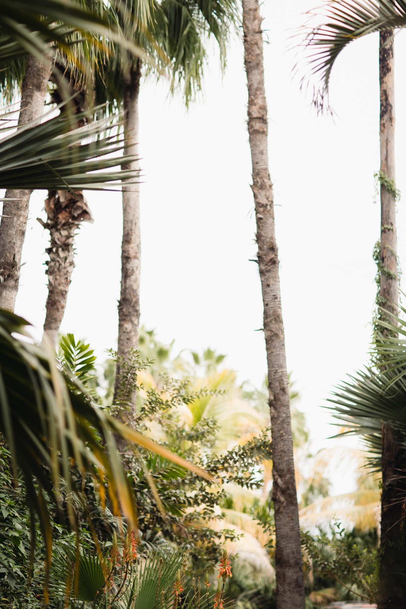 Gianna Keiko Todos Santos Cabo Baja Travel Wedding Elopement Photographer-2.jpg