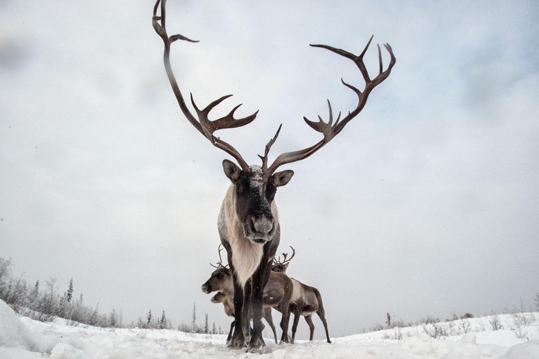 Mather_Peter07_Wildlife.jpg