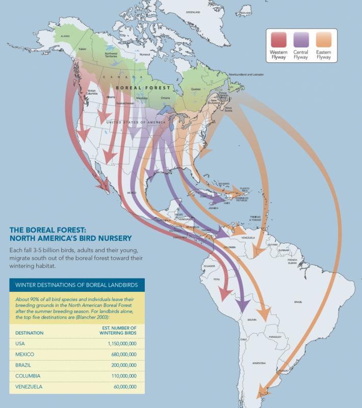 Map-Boreal-Bird-Migrations.jpg