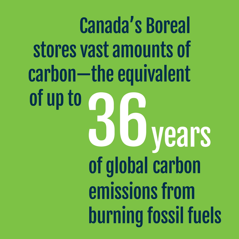 Carbon - Fact