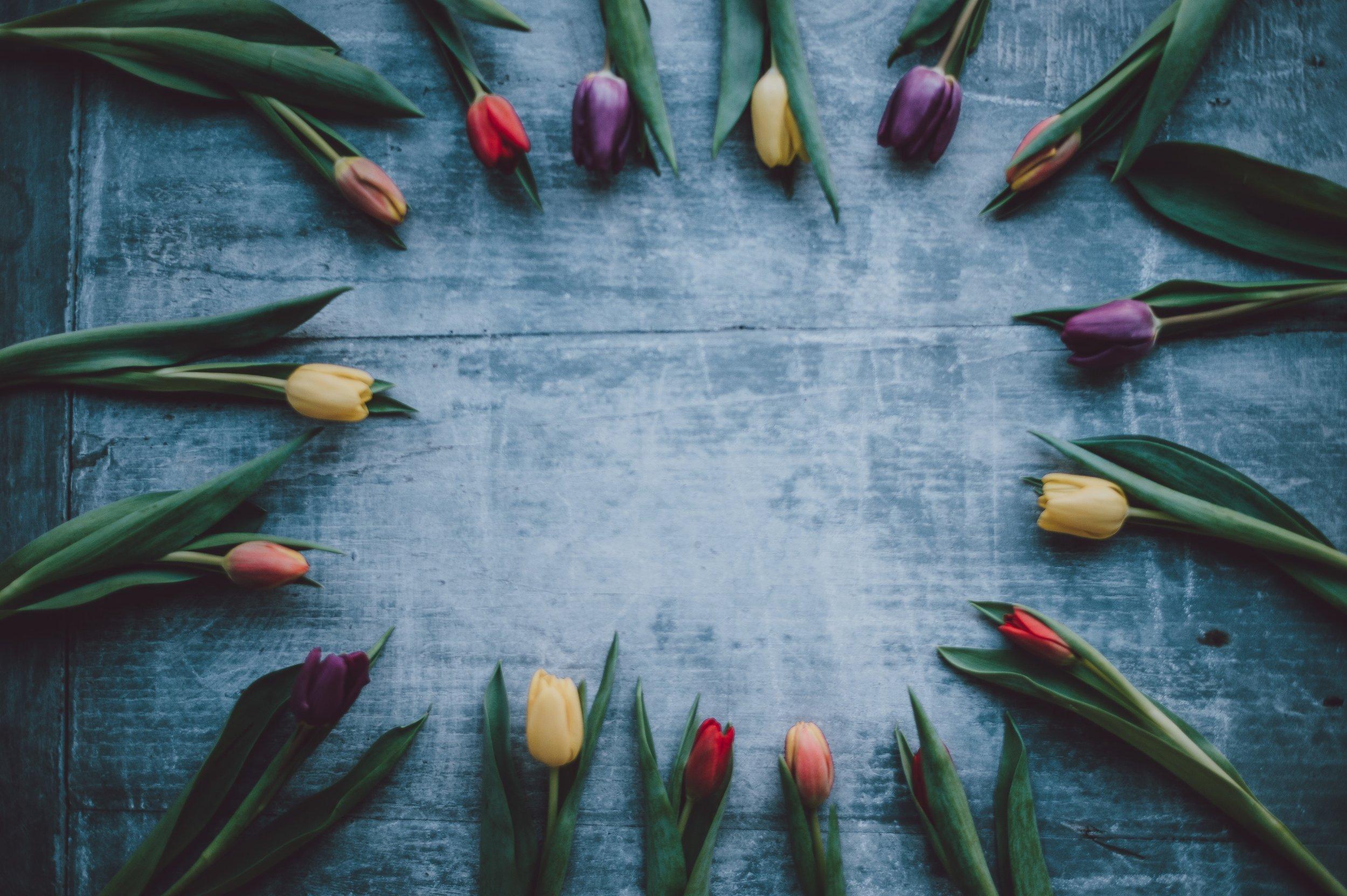 tulips on a table.jpg