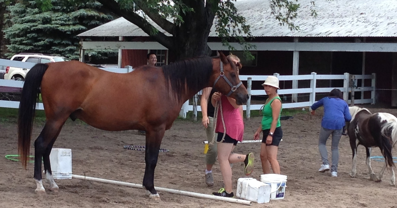 horse-powered-reading-facilitator-training.jpeg