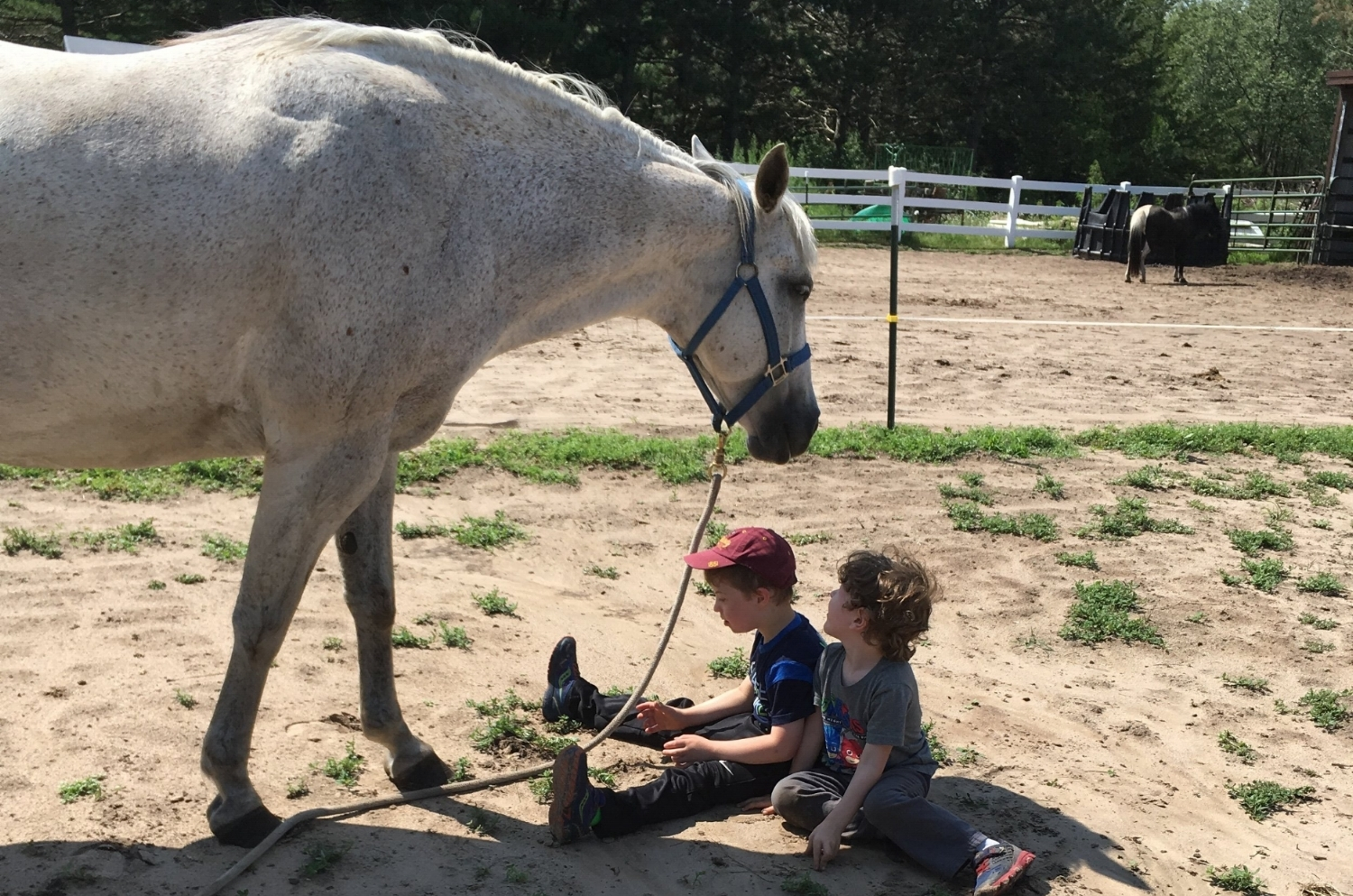 equine-assisted-learning.JPG