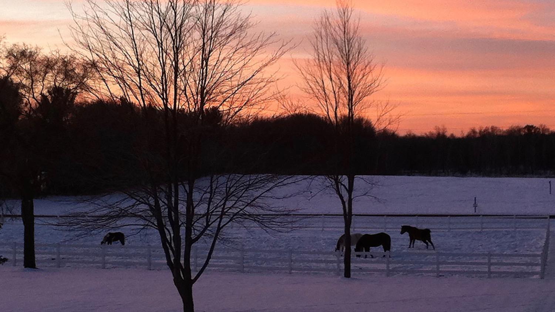 snow-horses-sunset 2.jpg