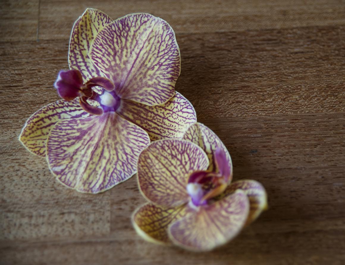 flowers01 200dpi.jpg