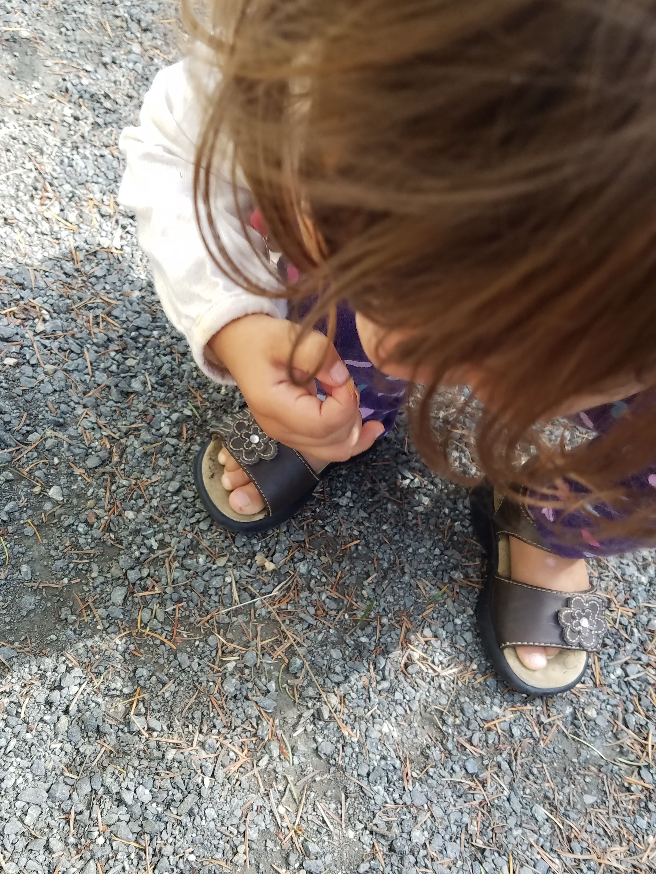 Examining fir needles and ants on the gravel sidewalk!
