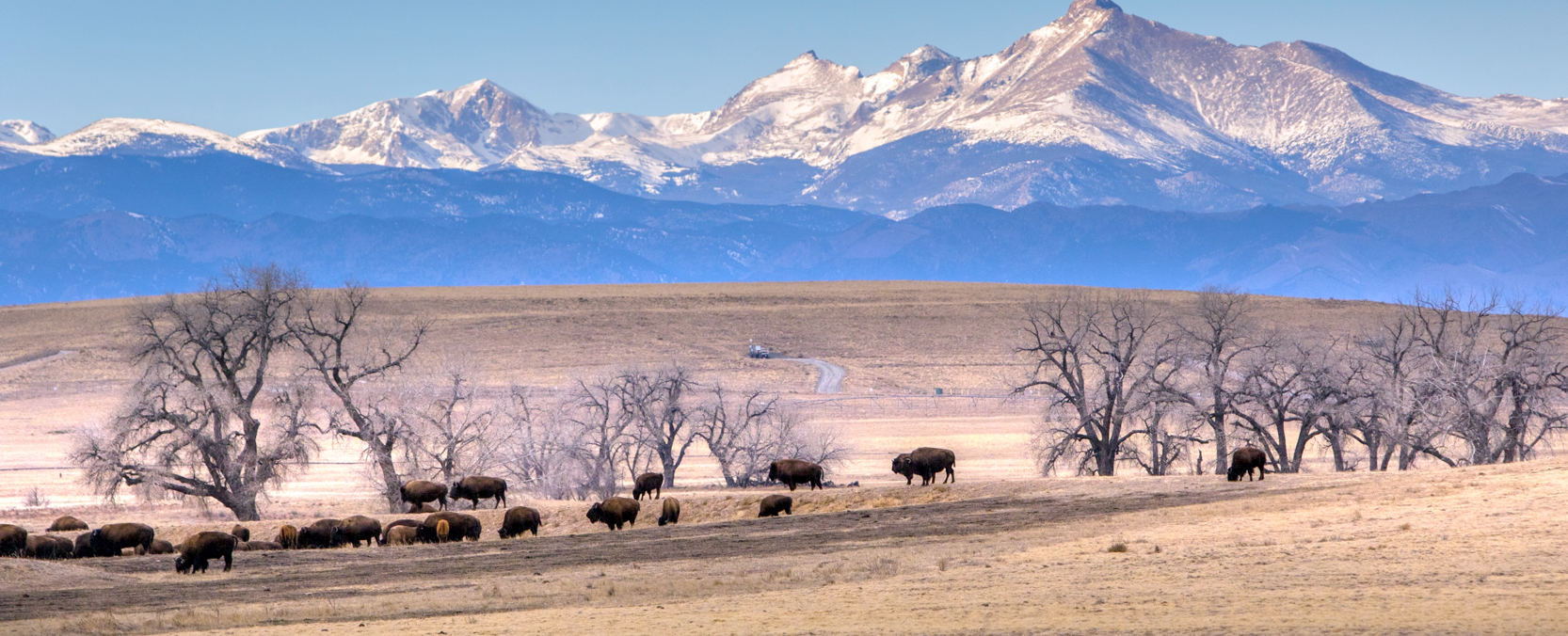 Photo by Reid Neureiter. Source:  Colorado State University website .