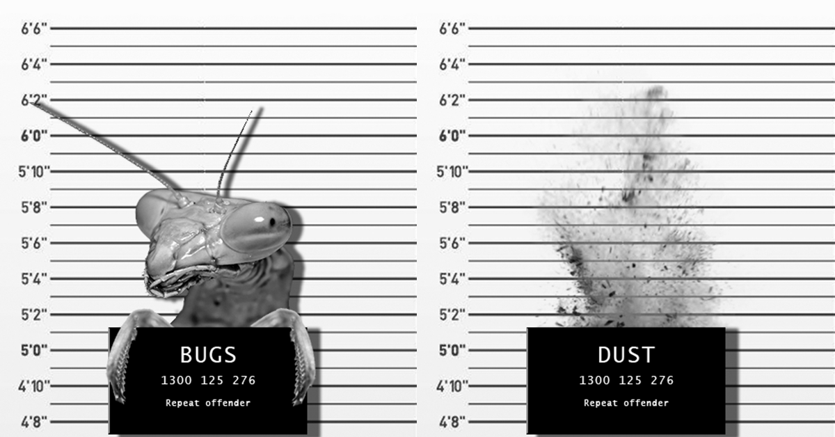 Read up on bugs & dust