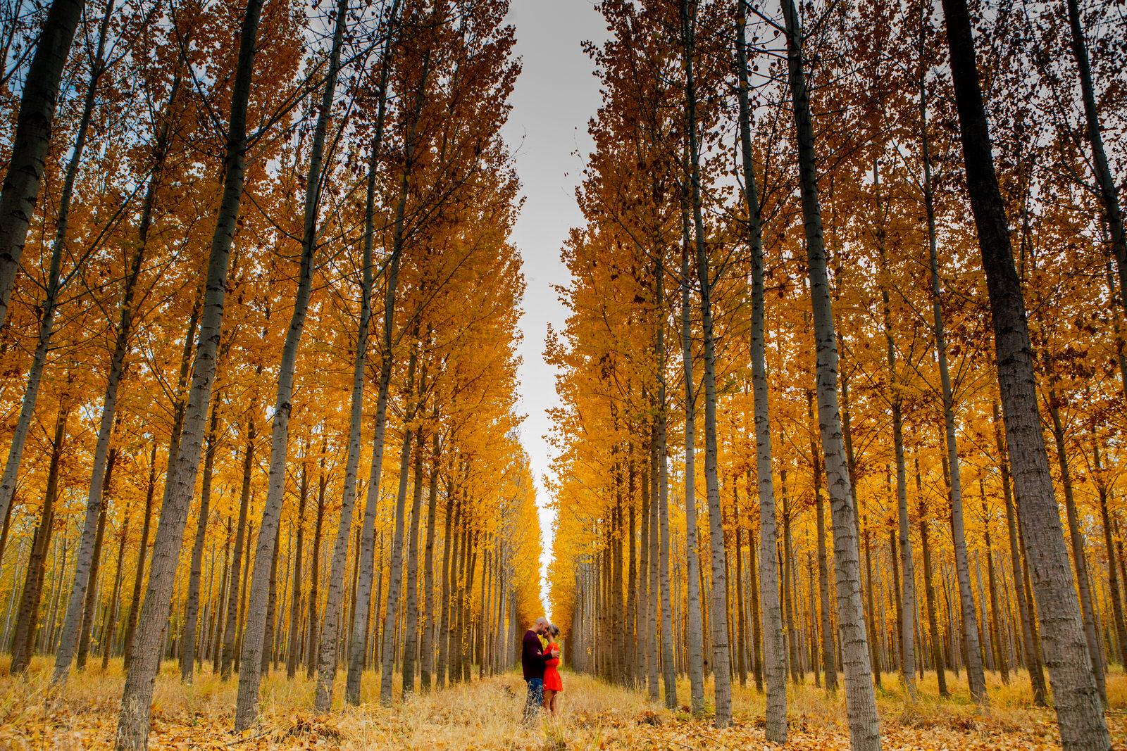Rachel & Cyle Boardman Tree Farm40-2.jpg