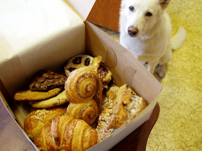 My dog about to hit me over the head with a hammer so he can get the Nuvrei pastries
