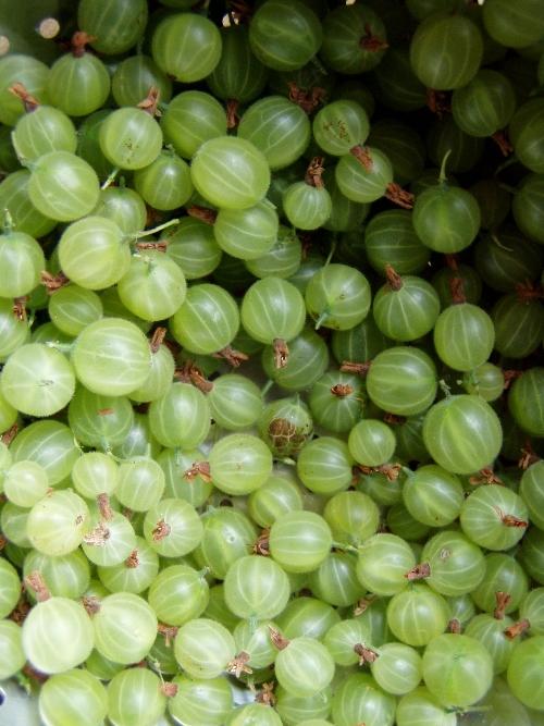 Gooseberries look like marbles.