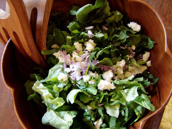Butter lettuce, sorrel, mint, chive and chive flower salad with red wine vinaigrette and crumbled feta