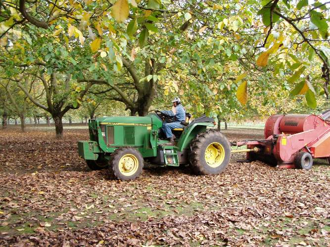 The 100 plus year old walnut grove is 15 acres. The entire farm is 45 acres.