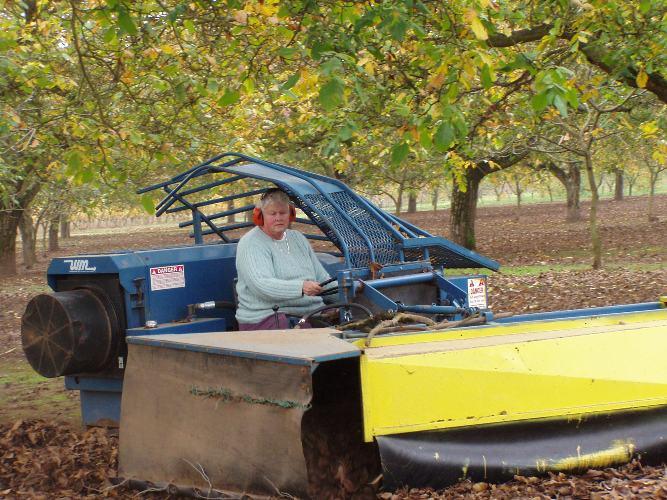 Mardi Eggers in the walnut grove on the diesel powered blower machine.