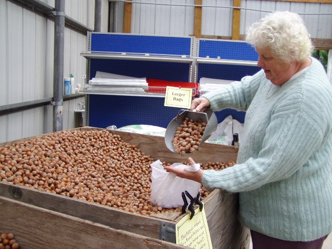 Mardi filling a bag of filberts for us from the Eggers Acres Farm Store.