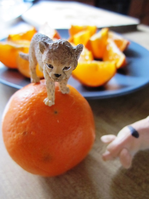 Leopards love tiny tangerines.
