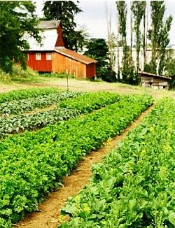 Zenger Farm needs your help