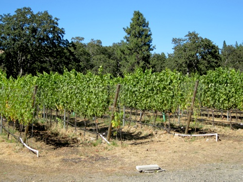 Syncline Winery, if you can't tell already, is beautiful.
