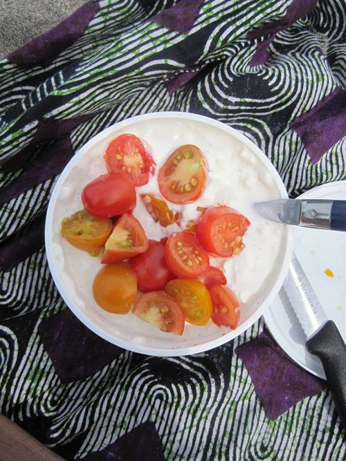River snack. Cottage cheese, tomatoes, salt and pepper. Simple and perfect.