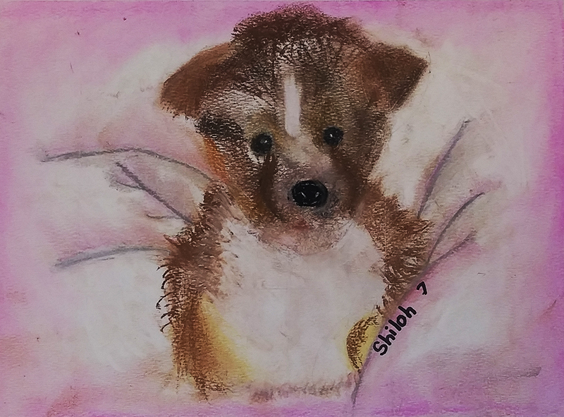 Puppy by Shiloh, age 7