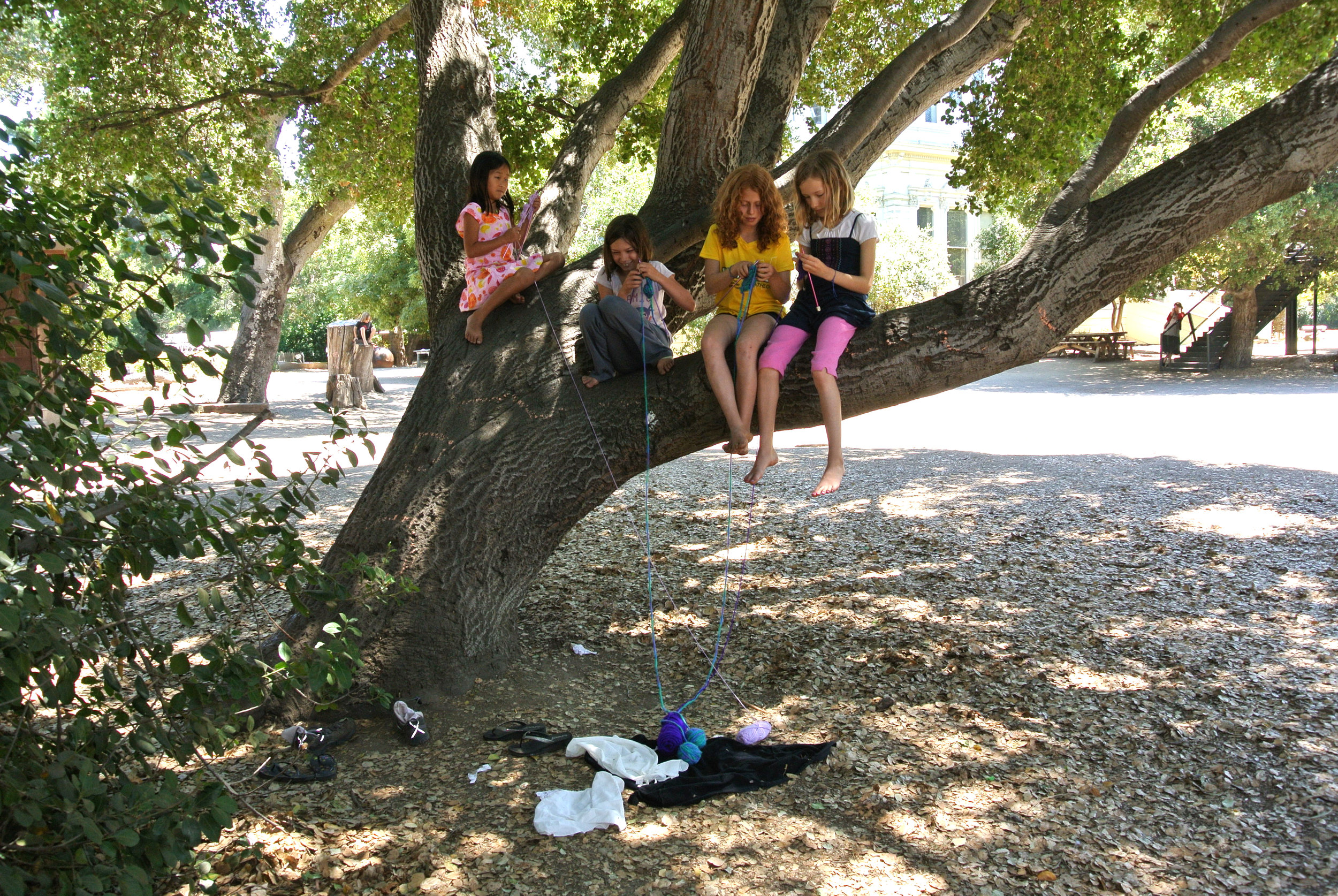 knitting in tree color.jpg