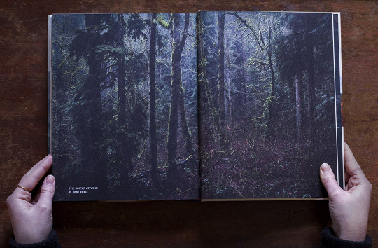 Dark Forest  from   The Sound of Wind
