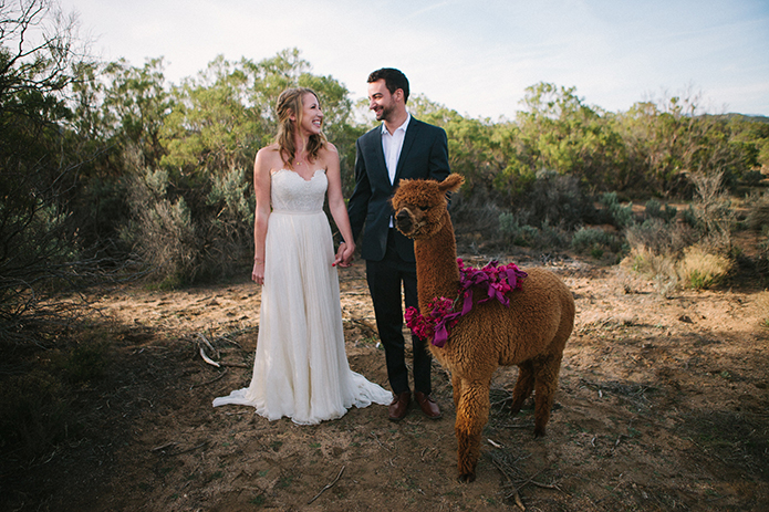 Anza-Valley-wedding-at-the-alpaca-farm-bride-and-groom-holding-hands-with-alpaca.jpg