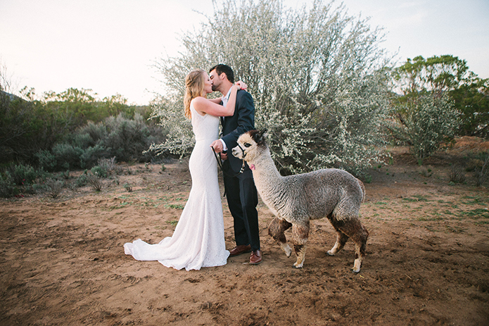 Anza-valley-wedding-at-the-alpaca-farm-bride-and-groom-kissing-next-to-alpaca.jpg