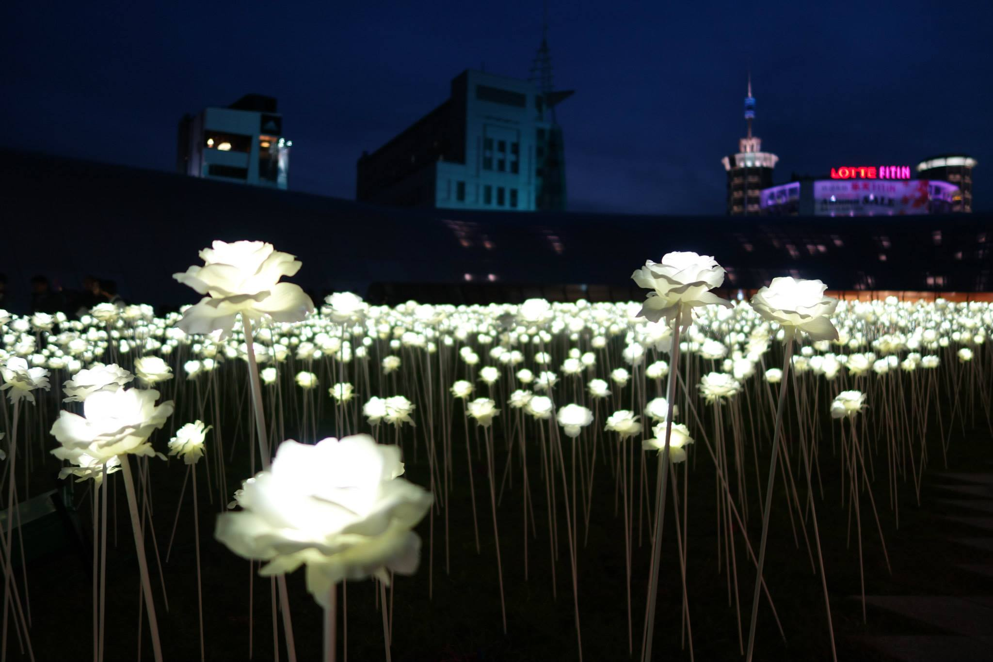 LED flowers light up after the sun sets making it magical at night
