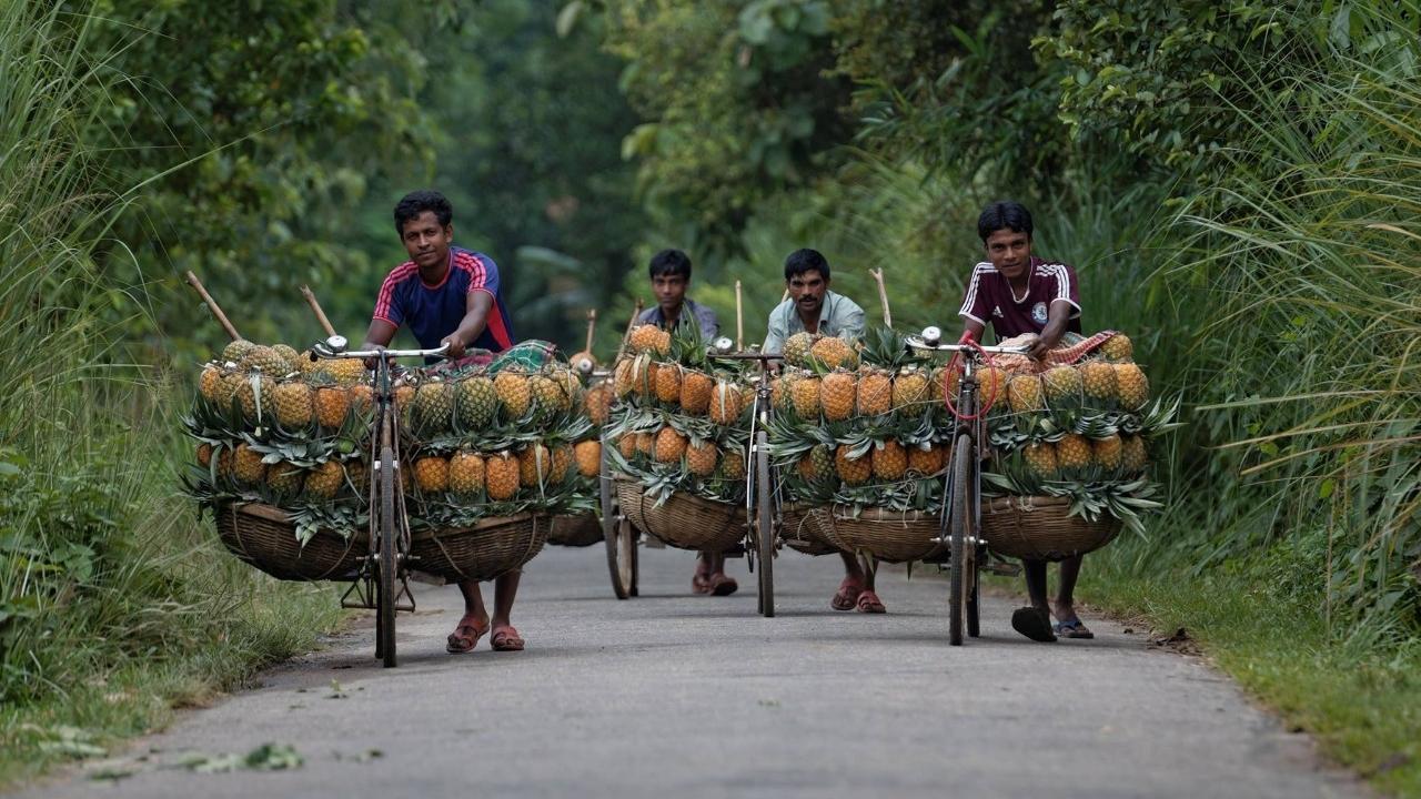 Pineapple Wallahs