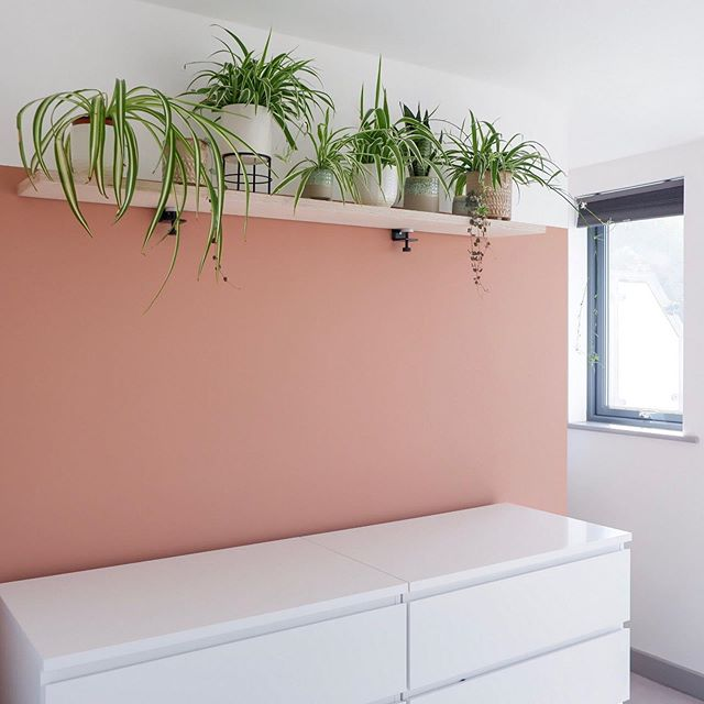 Hi everyone, I hope you're having a great weekend. You'll be glad to see the shelf is finally up and I've been in my element styling the plants 🌱⠀ ⠀ If you're looking for plants that look good together I'd recommend using a variety of spider plants and mother-in-laws tongue. You can soften the look and add detail with trailing plants, I've used string of hearts. ⠀ ⠀ The plants looks fab opposite the cactus artwork, I'm definitely feeling those desert vibes ☀️⠀ ⠀