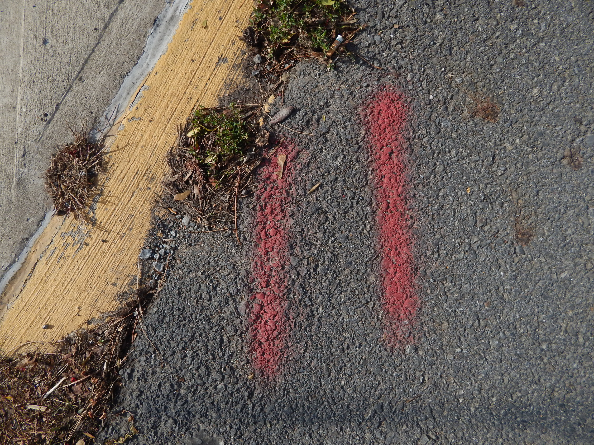 Red lines yellow curb.JPG