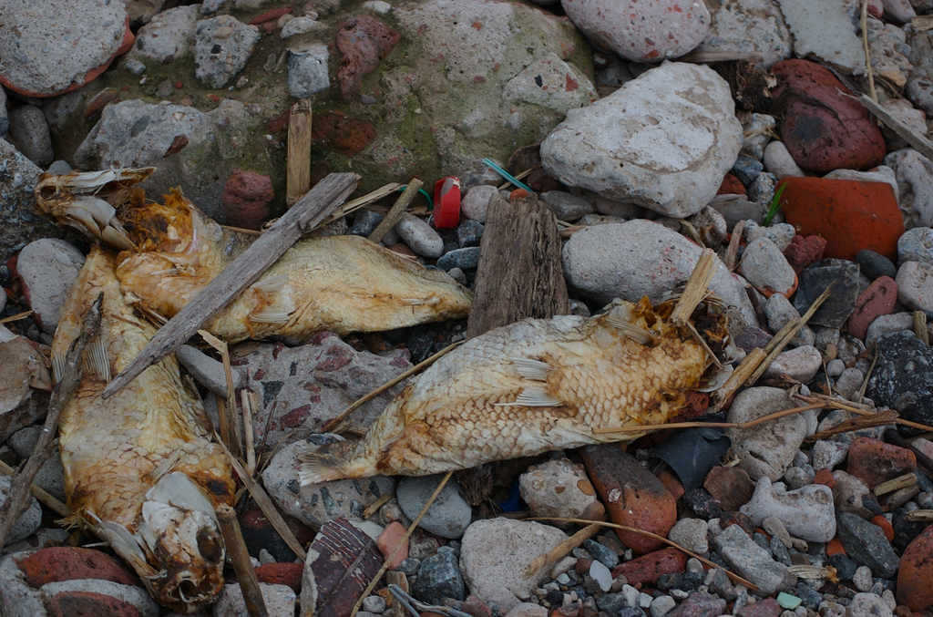 Microplastics are incredibly harmful to aquatic life