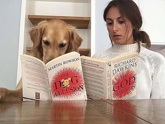An agnostic dyslexic insomniac lies awake at night wondering if there really is a dog. . . . . . . #goldenretriever #dogsofinstagram #instadog #londonsogs #pupfluencer #reading #crufts #workingdog #books #science #goldenretrievers #dog #doggo #doge #weeklyfluff #sunday #weekend #londonlife #londoner #golden #petmodel