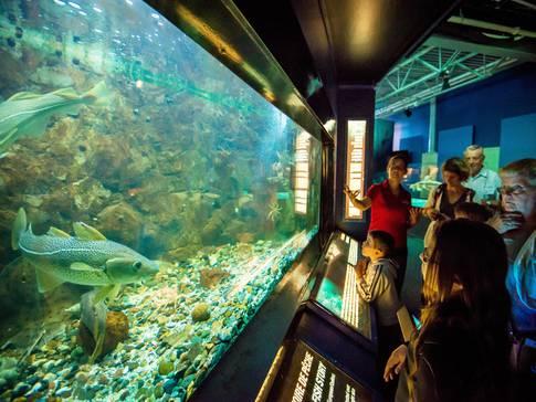 Un des aquariums d'Exploramer  Photo : Exploramer