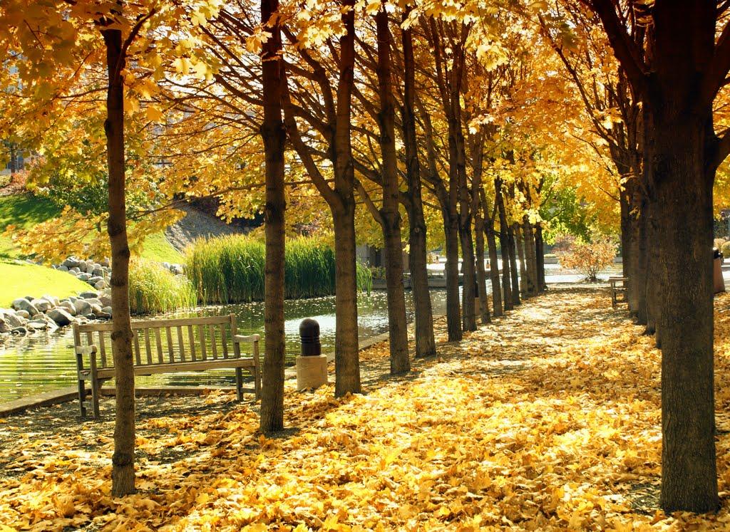 Centennial Lakes 6 copy.jpg