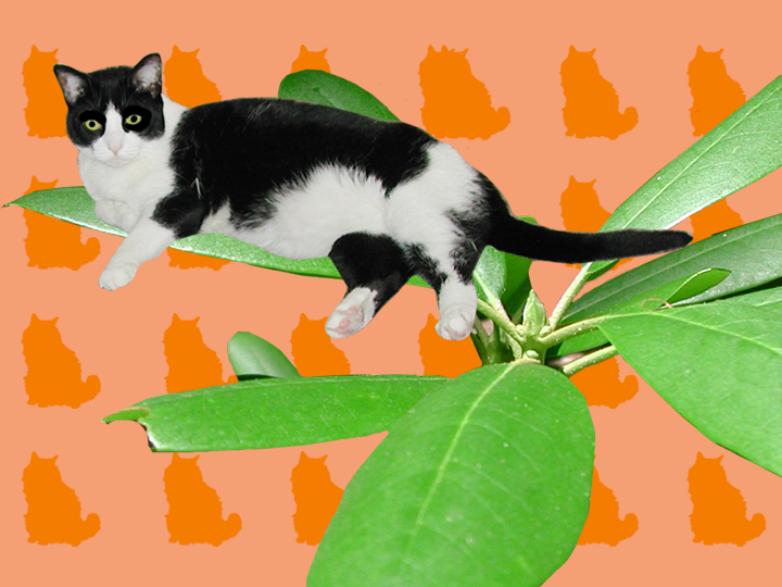 Cat and Leaves by Jane Aaron