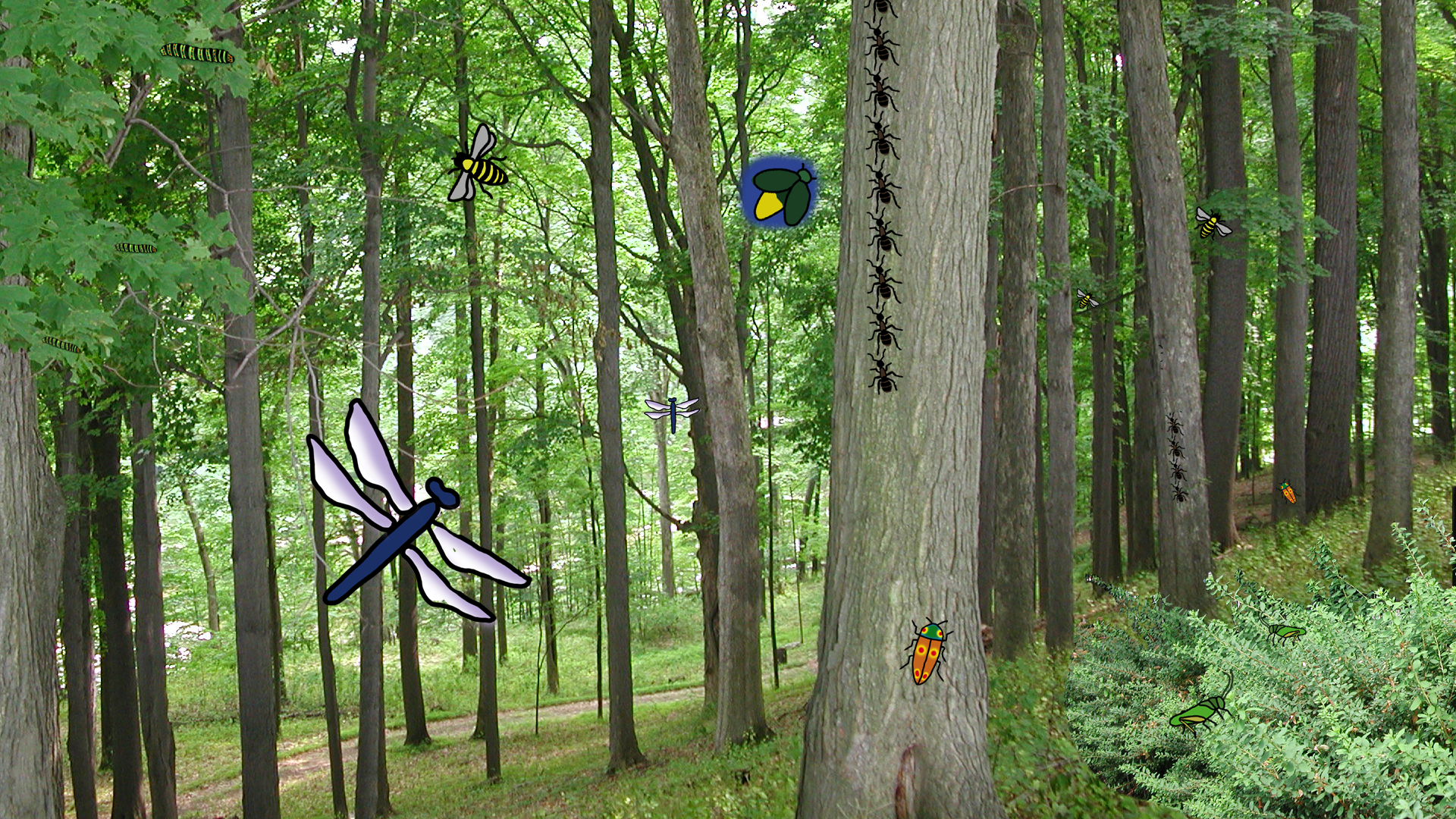 Bugs in the Woods by Jane Aaron