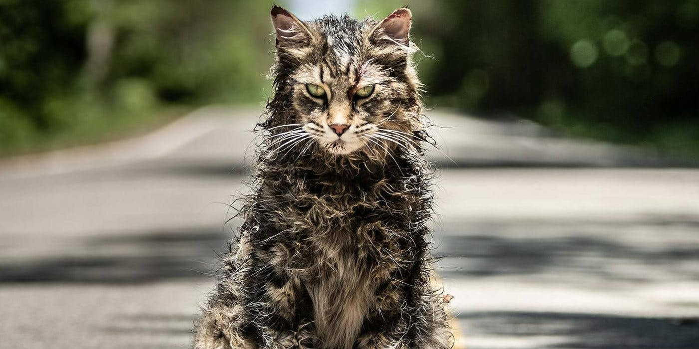 Cat-from-the-Pet-Sematary-2019-remake.jpg