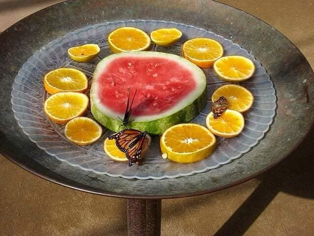 Watermelon and orange slices will attract both bees and butterflies.