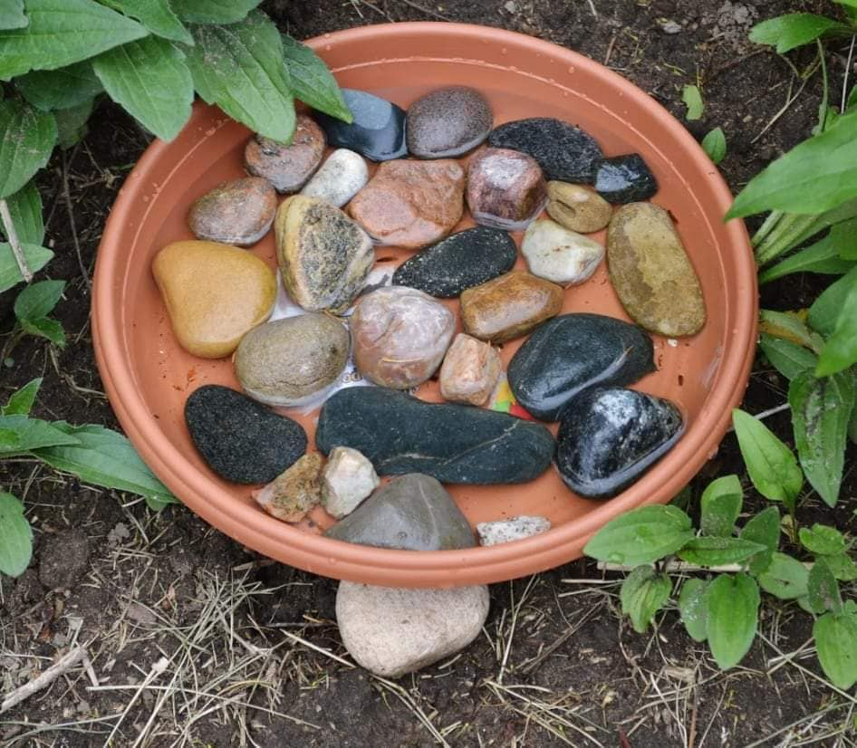 A bee bath requires plenty of stones so that the bees do not drown while attempting to get a drink of water. Have a bath for the birds and another for the bees. Now you can say you've learned about the birds and the bees! 🐝