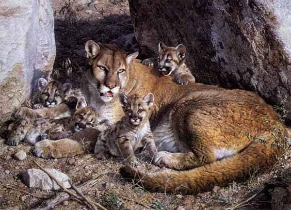 Cougar family near the vostok. (Photo by Carl brebders.) Cougars are rarely seen in Tatawaw Park today