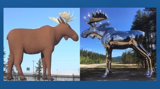 moose wars.jpg